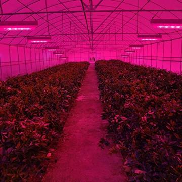 Derlight® 300W Das ganze Spektrum LED Pflanzenlampe für Gewächshaus Pflanze Bluete White Shell IR UV Licht für Zimmerpflanzen Blumen und Gemüse (300W) - 7