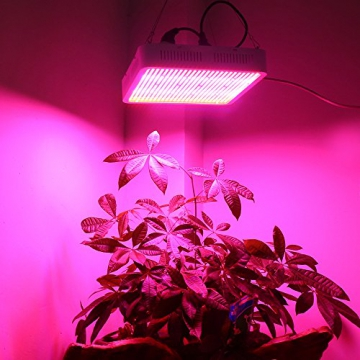 LED Grow Lampe für die Blüte Phase | Informationen | LED