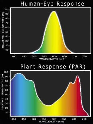 LED Wellenlänge PAR vs. menschliche Auge (LUX)