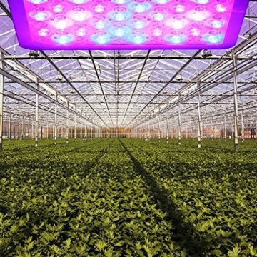 Niello® 300W LED Pflanzenlampe Optical Lens-Series Led Grow Light 12-Bands Full Spectrum Wachsen Licht Led Wachstumslampe Pflanzenlicht für Zimmerpflanzen Gemüse und Blumen - 5